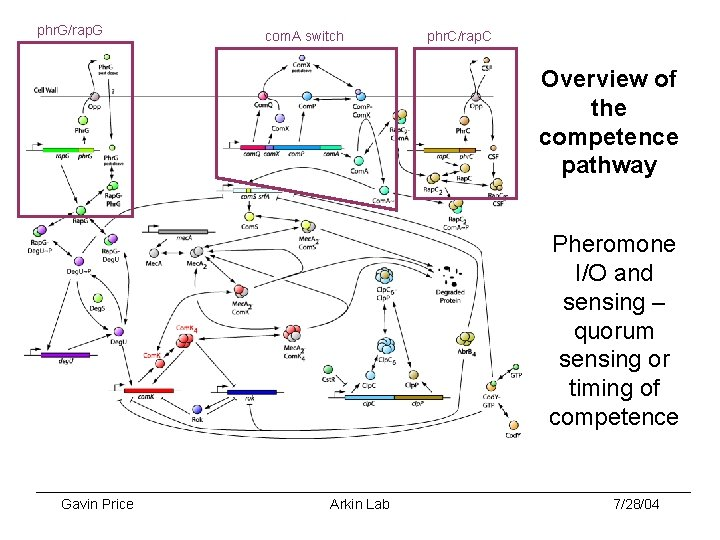 phr. G/rap. G com. A switch phr. C/rap. C Overview of the competence pathway