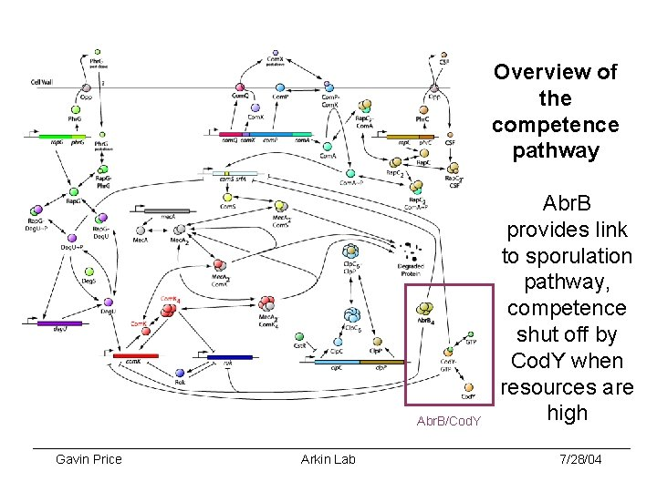 Overview of the competence pathway Abr. B/Cod. Y Gavin Price Arkin Lab Abr. B