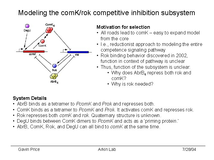 Modeling the com. K/rok competitive inhibition subsystem Motivation for selection • All roads lead