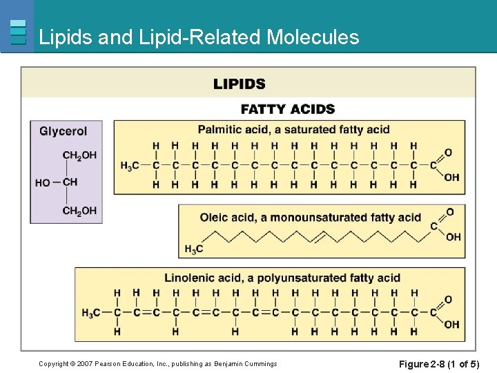 Lipids and Lipid-Related Molecules Copyright © 2007 Pearson Education, Inc. , publishing as Benjamin