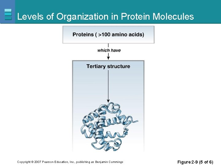 Levels of Organization in Protein Molecules Copyright © 2007 Pearson Education, Inc. , publishing