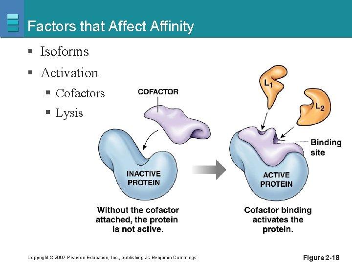 Factors that Affect Affinity § Isoforms § Activation § Cofactors § Lysis Copyright ©