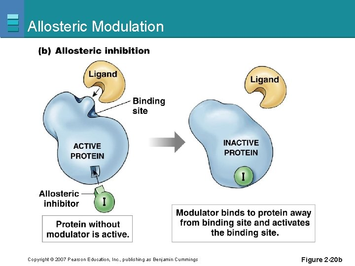 Allosteric Modulation Copyright © 2007 Pearson Education, Inc. , publishing as Benjamin Cummings Figure