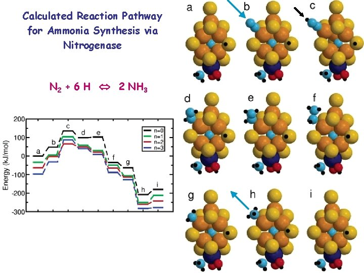 Calculated Reaction Pathway for Ammonia Synthesis via Nitrogenase N 2 + 6 H 2