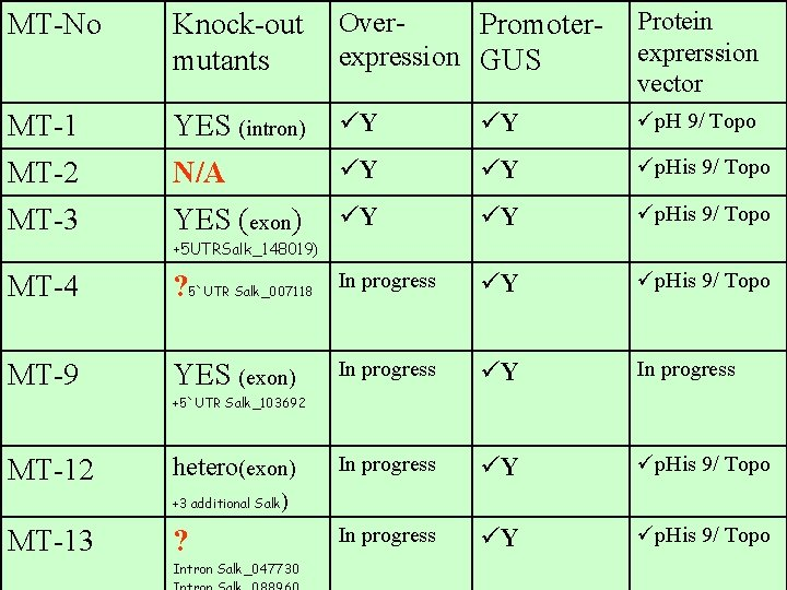 MT-No Knock-out mutants Over. Promoterexpression GUS Protein exprerssion vector MT-1 YES (intron) üY üY