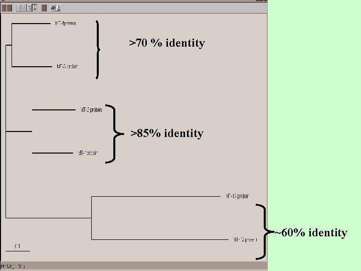 >70 % identity >85% identity ~60% identity