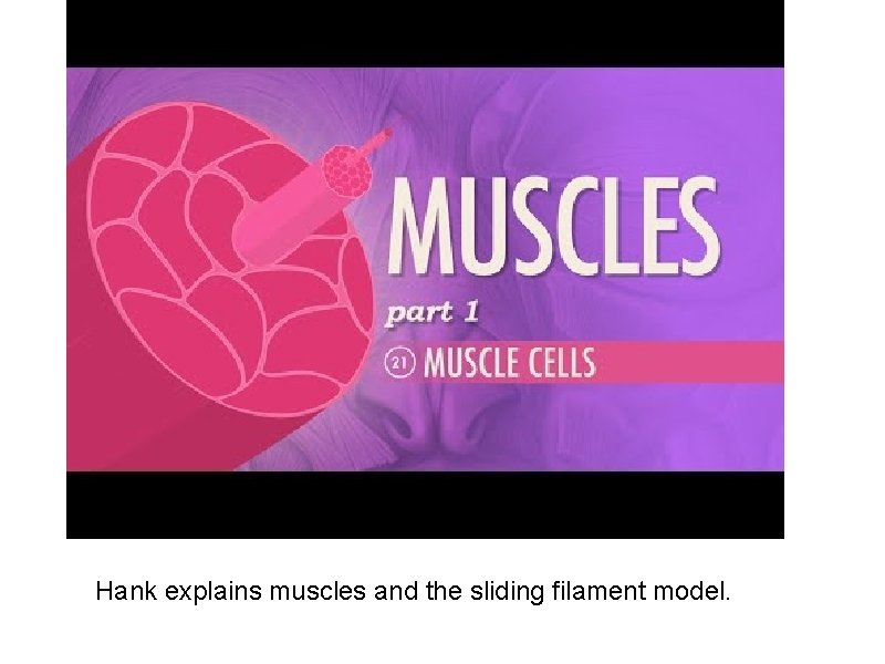 Hank explains muscles and the sliding filament model.