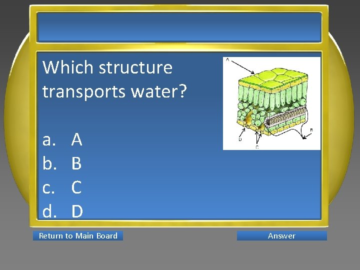 Which structure transports water? a. b. c. d. A B C D Return to