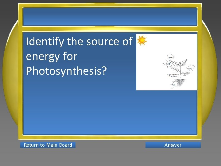 Identify the source of energy for Photosynthesis? Return to Main Board Answer