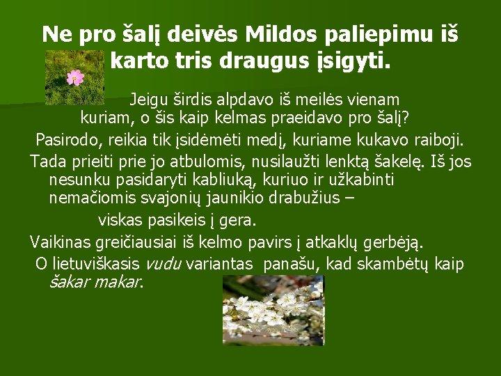 Ne pro šalį deivės Mildos paliepimu iš karto tris draugus įsigyti. Jeigu širdis alpdavo