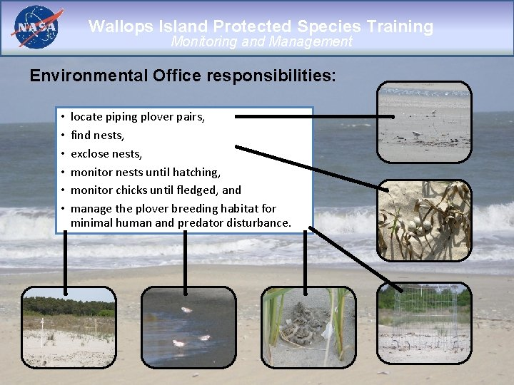 Wallops Island Protected Species Training Monitoring and Management Environmental Office responsibilities: • • •