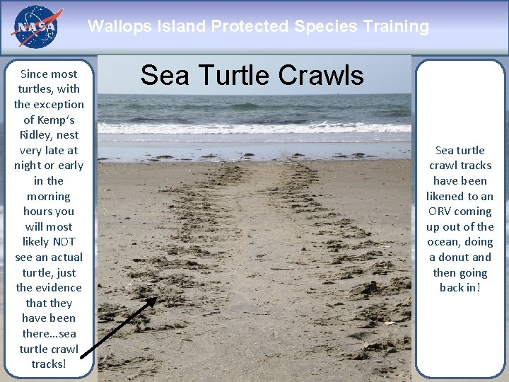 Wallops Island Protected Species Training Since most turtles, with the exception of Kemp's Ridley,