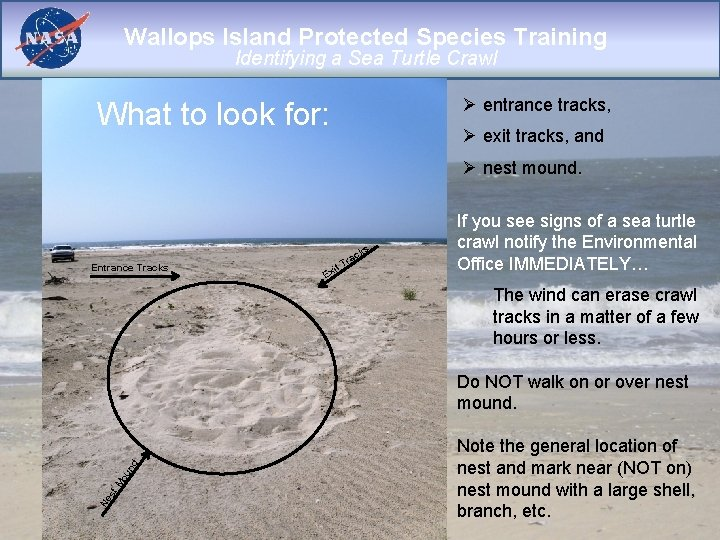 Wallops Island Protected Species Training Identifying a Sea Turtle Crawl Ø entrance tracks, What