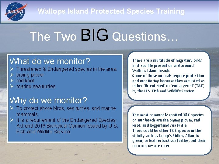 Wallops Island Protected Species Training The Two BIG Questions… What do we monitor? Ø
