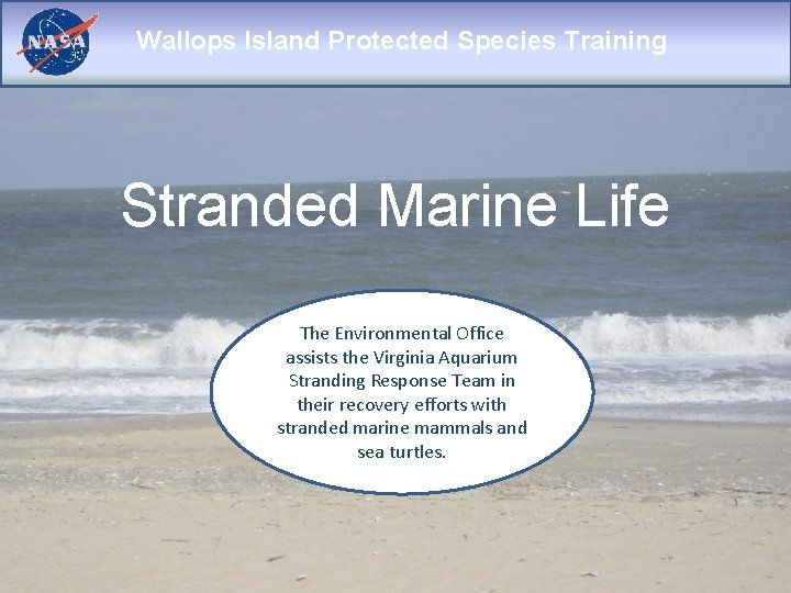 Wallops Island Protected Species Training Stranded Marine Life The Environmental Office assists the Virginia