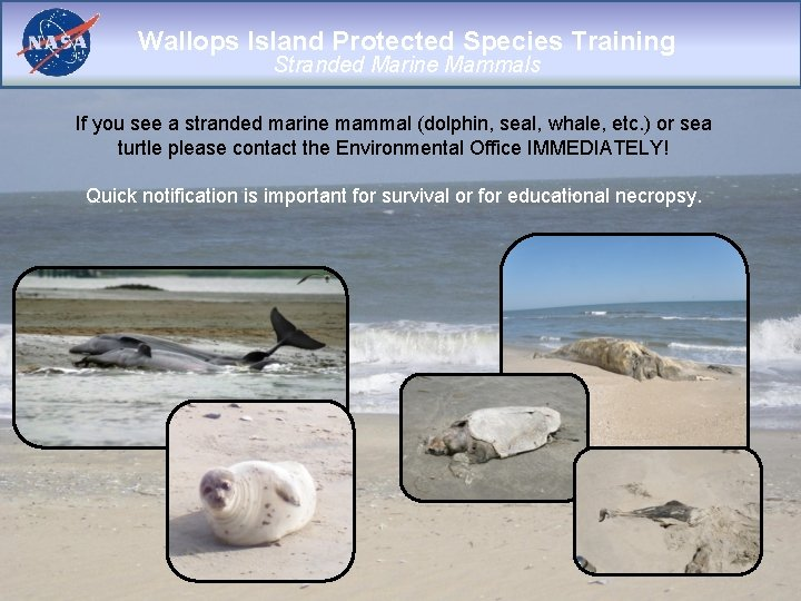 Wallops Island Protected Species Training Stranded Marine Mammals If you see a stranded marine