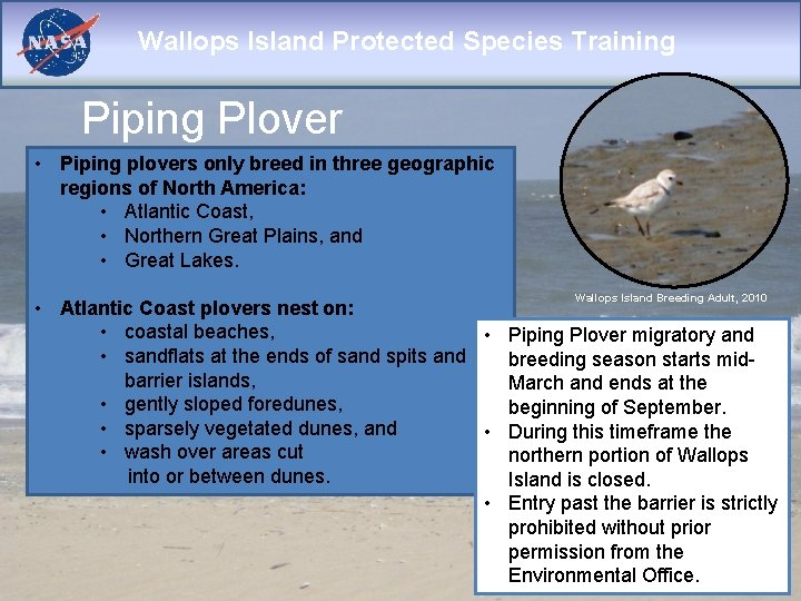 Wallops Island Protected Species Training Piping Plover • Piping plovers only breed in three
