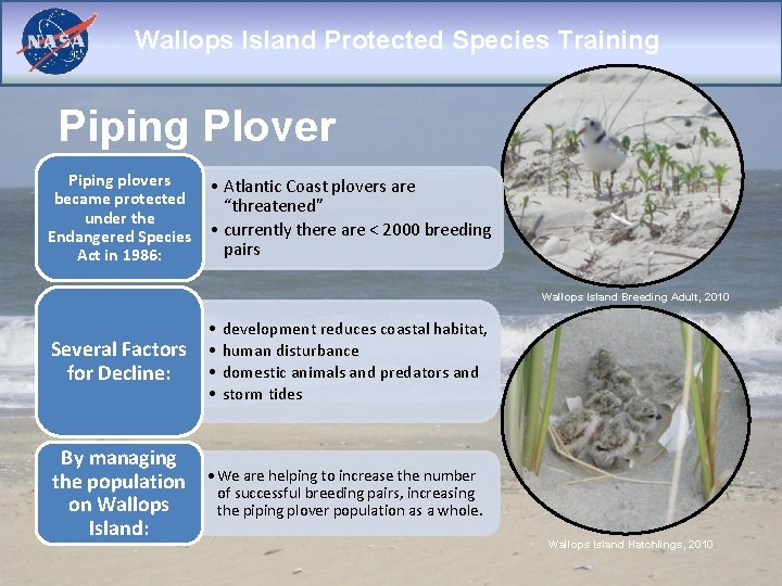 Wallops Island Protected Species Training Piping Plover Piping plovers became protected under the Endangered