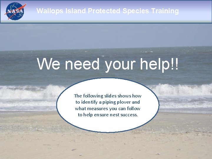 Wallops Island Protected Species Training We need your help!! The following slides shows how