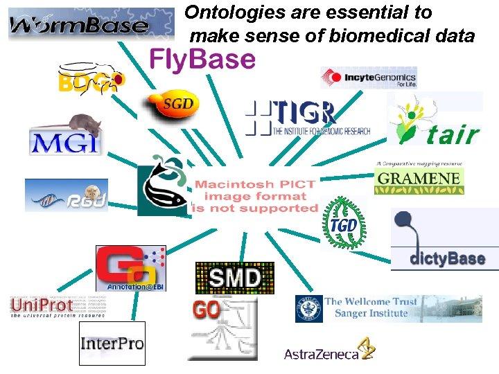Ontologies are essential to make sense of biomedical data