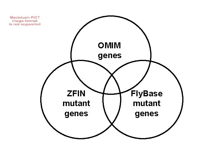 OMIM genes ZFIN mutant genes Fly. Base mutant genes
