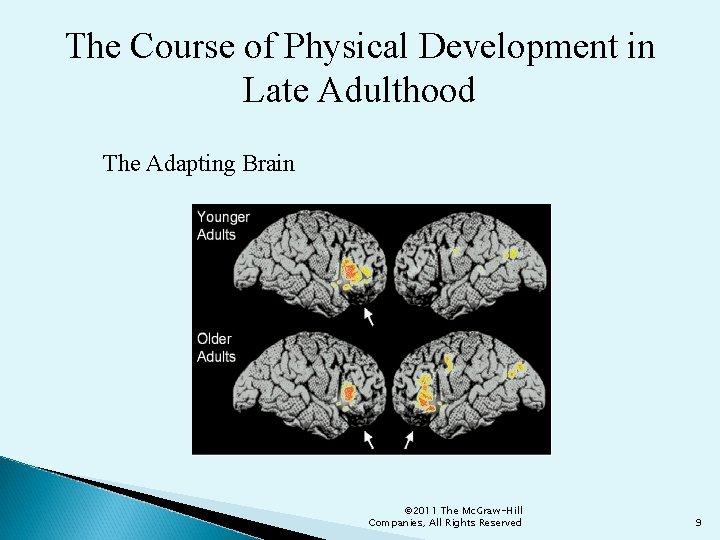 The Course of Physical Development in Late Adulthood The Adapting Brain © 2011 The