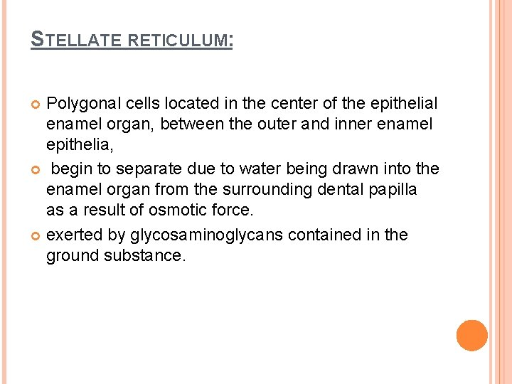 STELLATE RETICULUM: Polygonal cells located in the center of the epithelial enamel organ, between