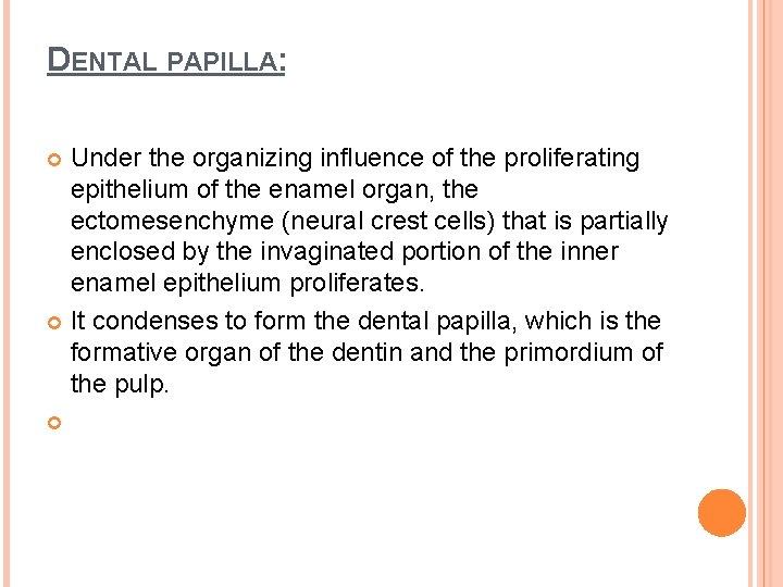 DENTAL PAPILLA: Under the organizing influence of the proliferating epithelium of the enamel organ,