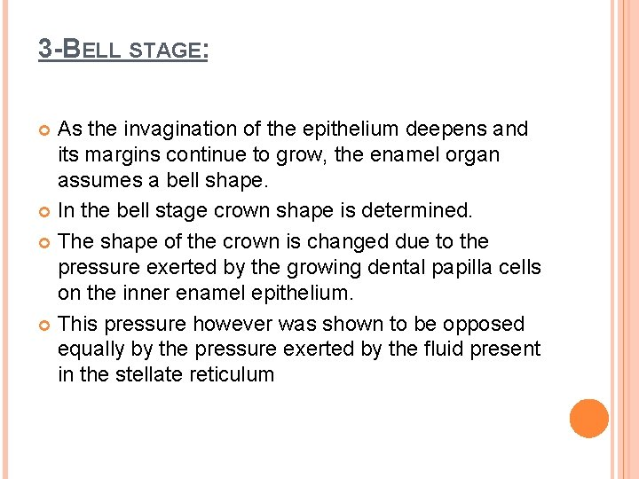 3 -BELL STAGE: As the invagination of the epithelium deepens and its margins continue