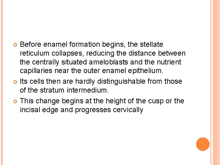 Before enamel formation begins, the stellate reticulum collapses, reducing the distance between the centrally