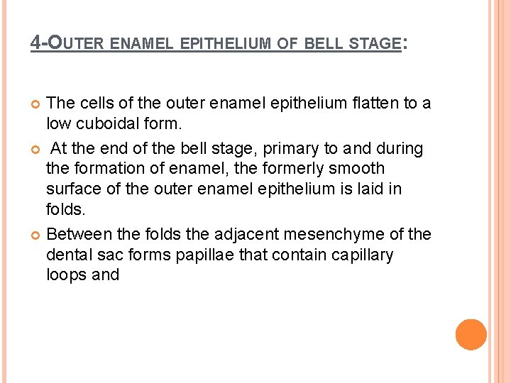 4 -OUTER ENAMEL EPITHELIUM OF BELL STAGE: The cells of the outer enamel epithelium