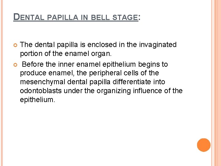 DENTAL PAPILLA IN BELL STAGE: The dental papilla is enclosed in the invaginated portion