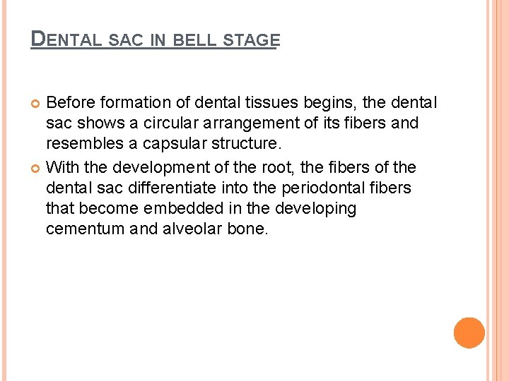 DENTAL SAC IN BELL STAGE Before formation of dental tissues begins, the dental sac