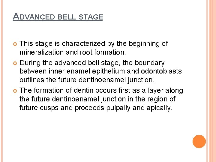 ADVANCED BELL STAGE This stage is characterized by the beginning of mineralization and root