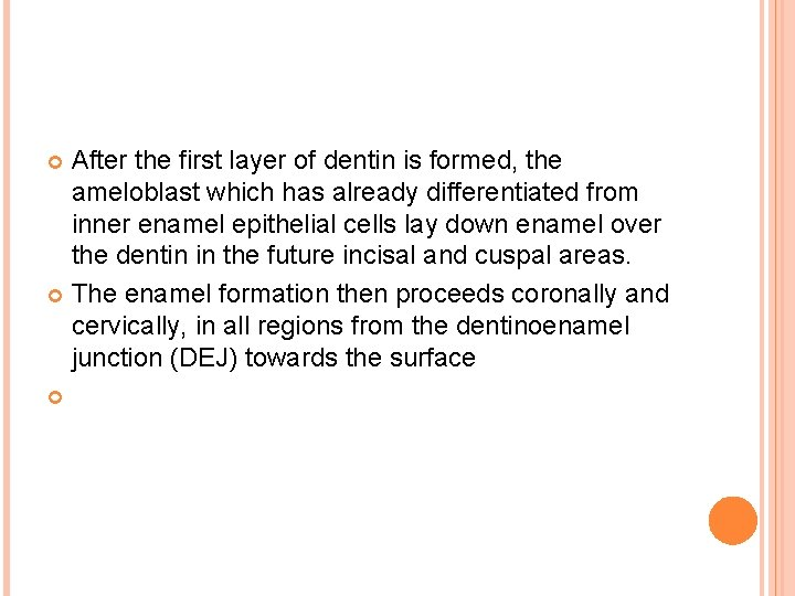 After the first layer of dentin is formed, the ameloblast which has already differentiated
