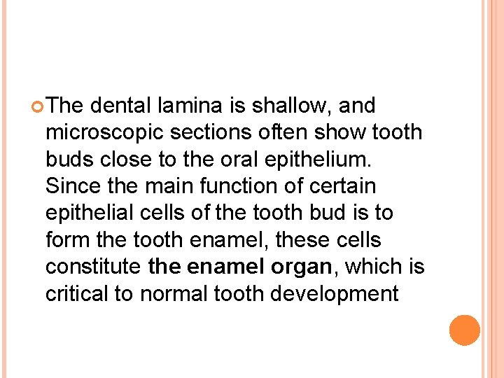 The dental lamina is shallow, and microscopic sections often show tooth buds close