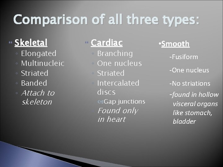 Comparison of all three types: Skeletal ◦ ◦ ◦ Elongated Multinucleic Striated Banded Attach