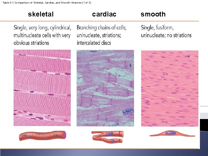 Table 6. 1 Comparison of Skeletal, Cardiac, and Smooth Muscles (1 of 3) skeletal