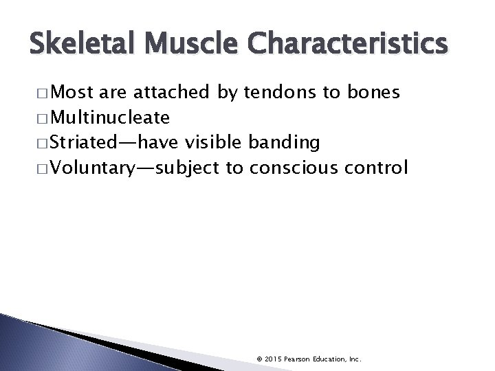 Skeletal Muscle Characteristics � Most are attached by tendons to bones � Multinucleate �