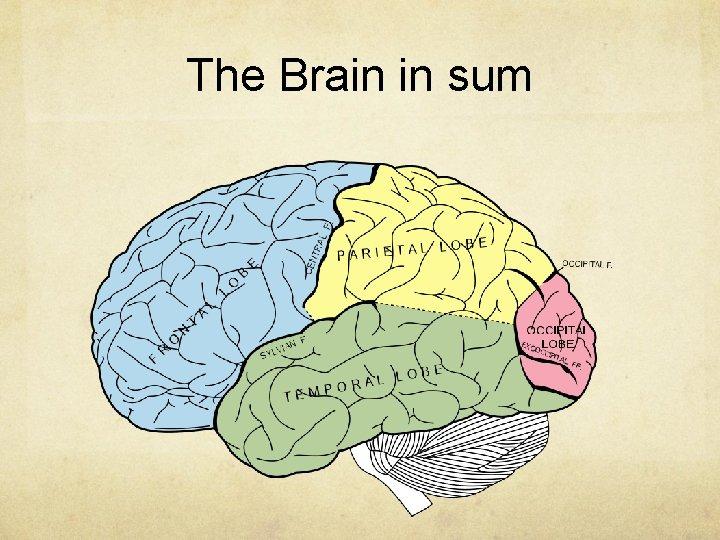 The Brain in sum