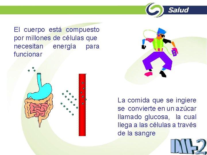 El cuerpo está compuesto por millones de células que necesitan energía para funcionar La