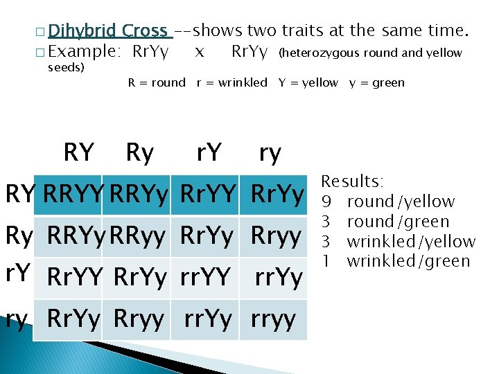 � Dihybrid Cross --shows two traits at the same time. � Example: Rr. Yy
