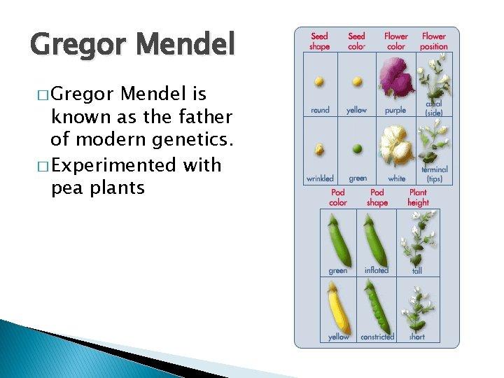 Gregor Mendel � Gregor Mendel is known as the father of modern genetics. �