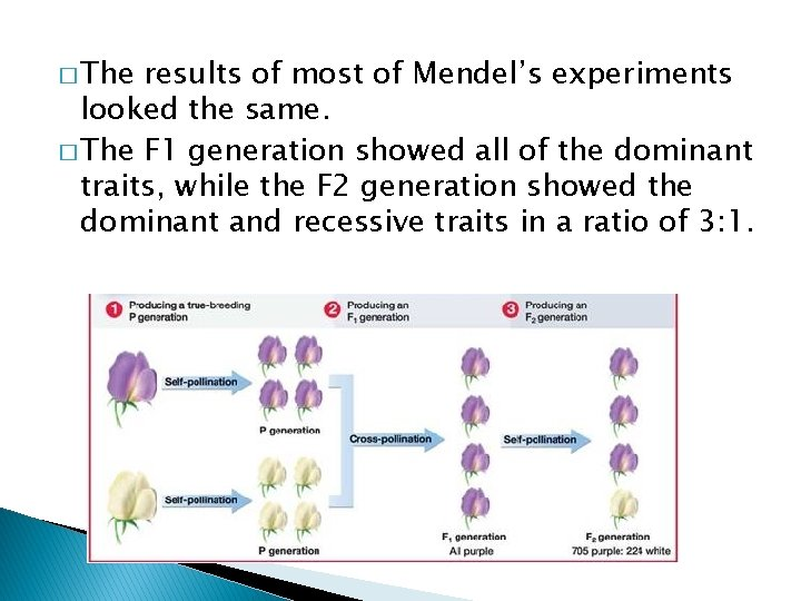 � The results of most of Mendel's experiments looked the same. � The F