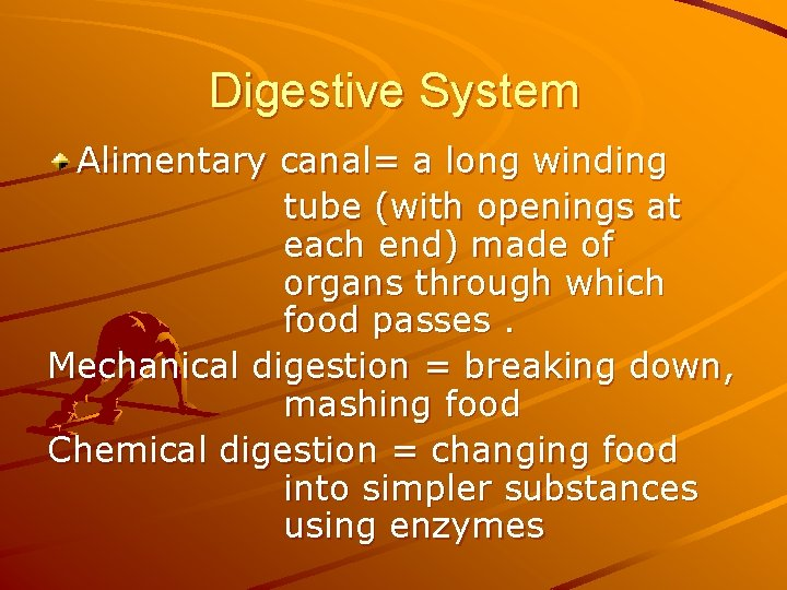 Digestive System Alimentary canal= a long winding tube (with openings at each end) made