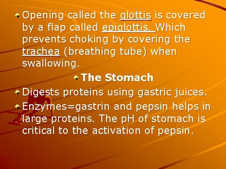 Opening called the glottis is covered by a flap called epiglottis. Which prevents choking