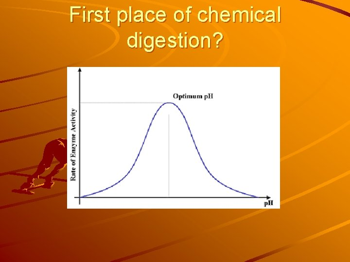First place of chemical digestion?