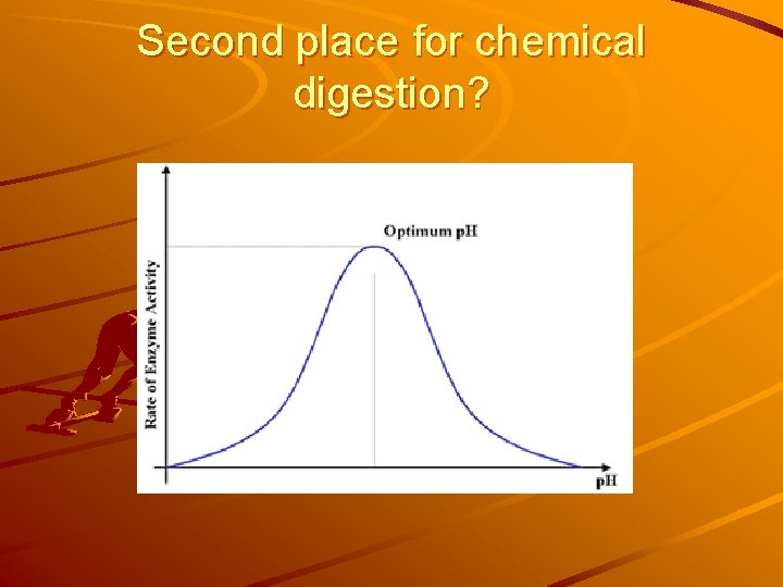 Second place for chemical digestion?