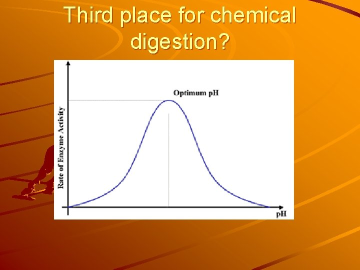 Third place for chemical digestion?