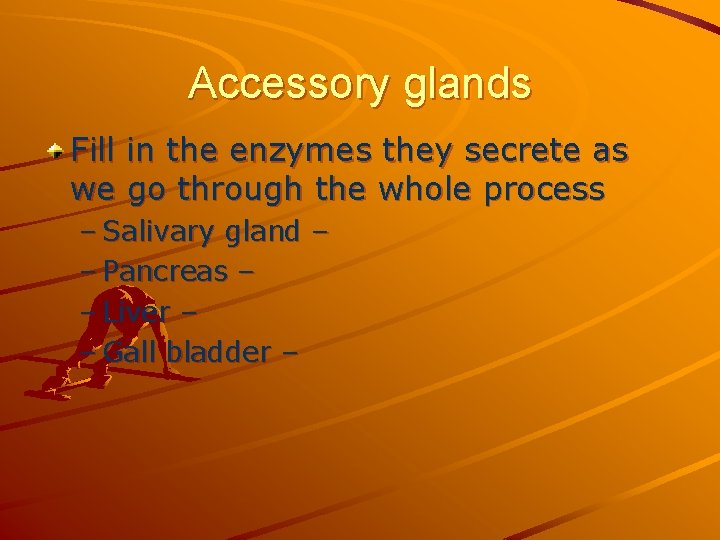 Accessory glands Fill in the enzymes they secrete as we go through the whole